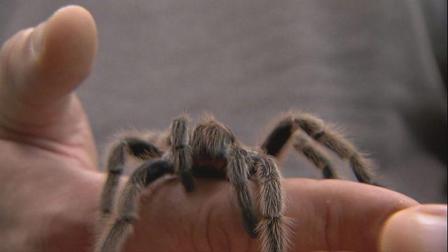 Spider venom could save lives