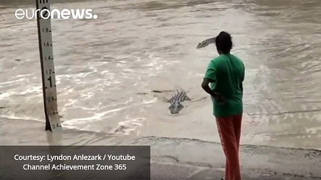 Woman shoos away four-metre-long crocodile with her flip-flop