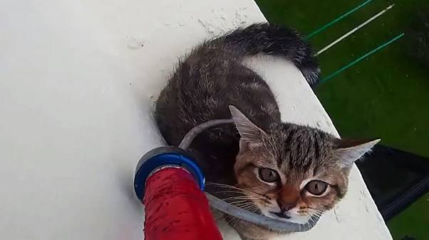 Dizzying footage of a cat being rescued from a 12th story ledge