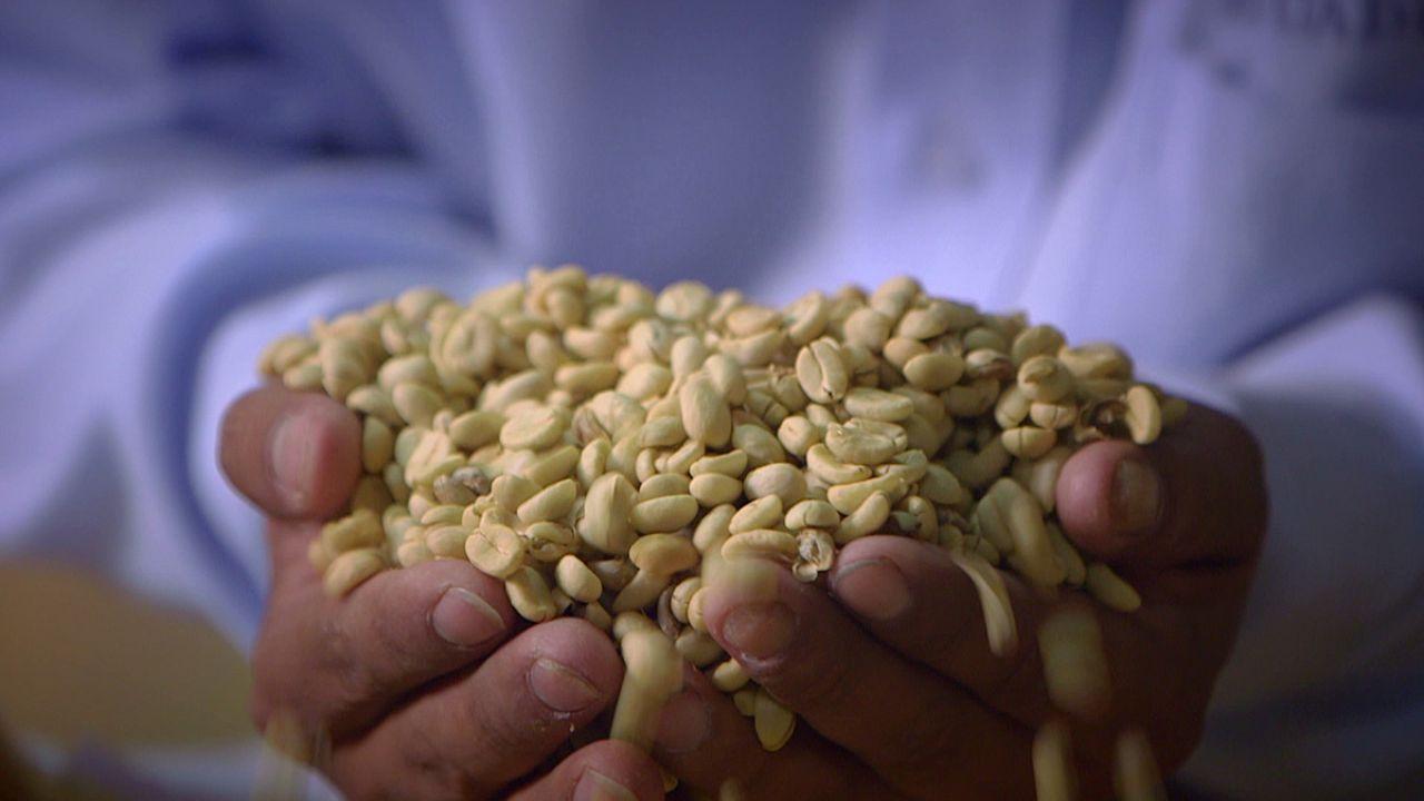 نكهات البن والكاكاو تفوح من البيرو