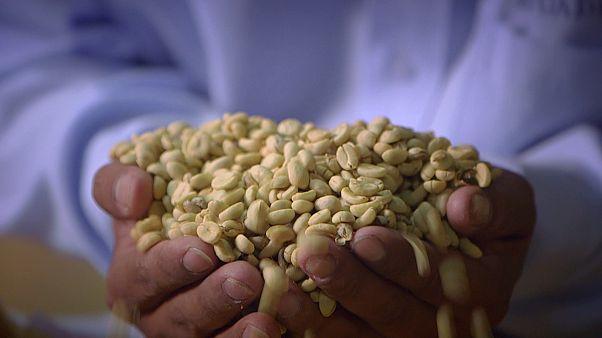 Nehéz a fair trade kávé- és kakaótermesztők élete - de nem reménytelen