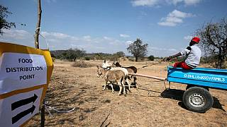 Zimbabwe: effects of El Nino threaten fight against HIV
