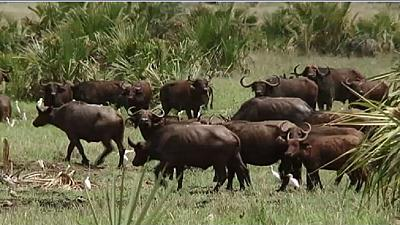 African conservationists call for renewed efforts in tackling human wildlife conflict