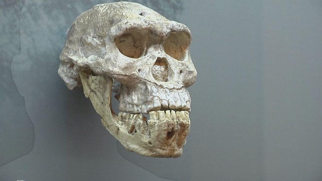 معرض حول التطور البشري في المتحف الوطني الجورجي
