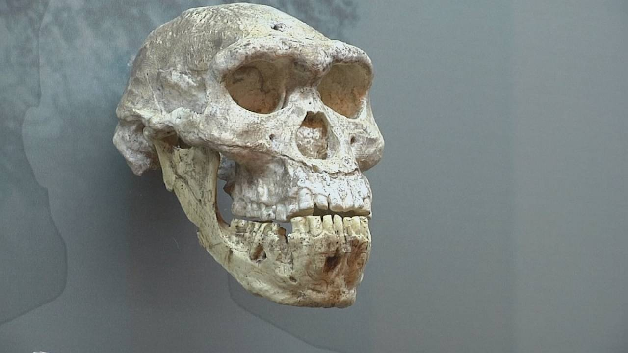 Meet your hominid ancestors in Georgia