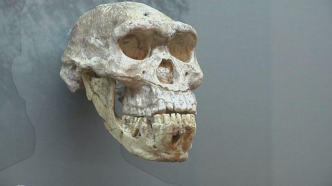 گنجینه ای از فسیل های انسان اولیه در موزه ملی گرجستان