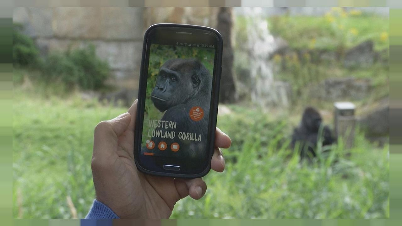 Technologie beacon : les balises du zoo de Berlin