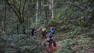 RDC : Greenpeace ''salue'' l'annulation de contrats forestiers illégaux