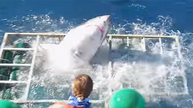 Un plongeur survit à un tête à tête avec un requin blanc