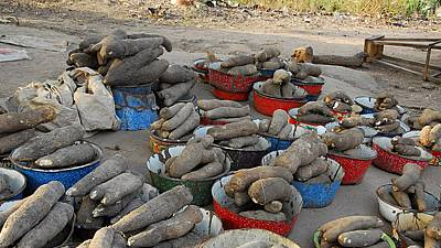 Le festival de l'igname au Bénin