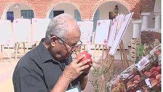Tunisie : un festival pour promouvoir la grenade