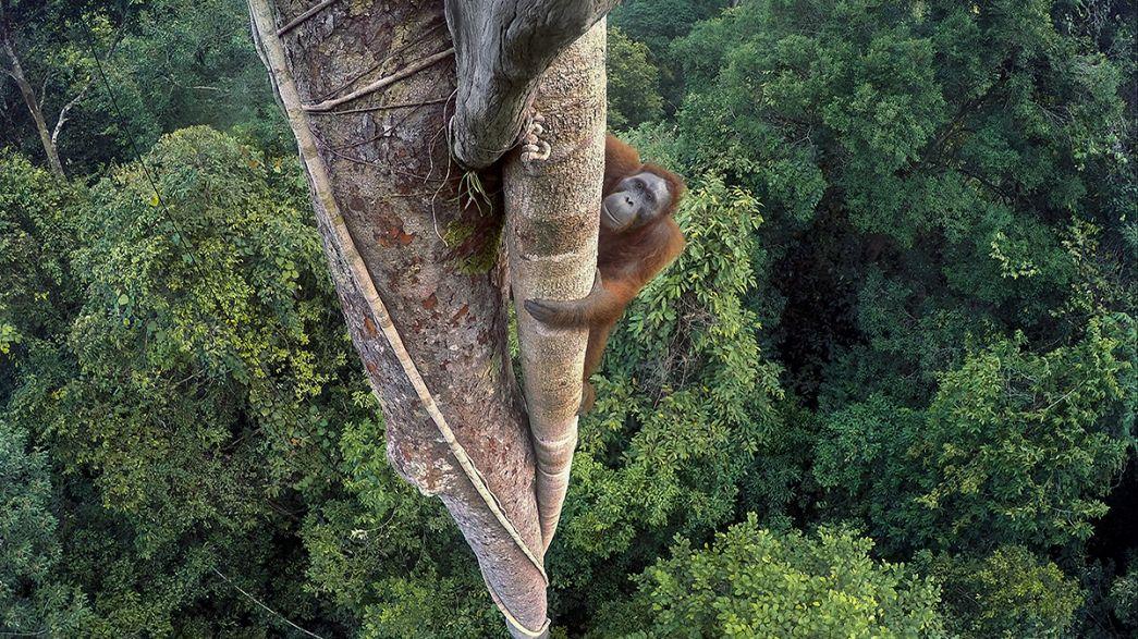 Победитель Wildlife Photographer of the Year-2016 - Тим Лэмен (США)