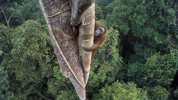[Galería] 'Wildlife Photographer of the Year' 2016