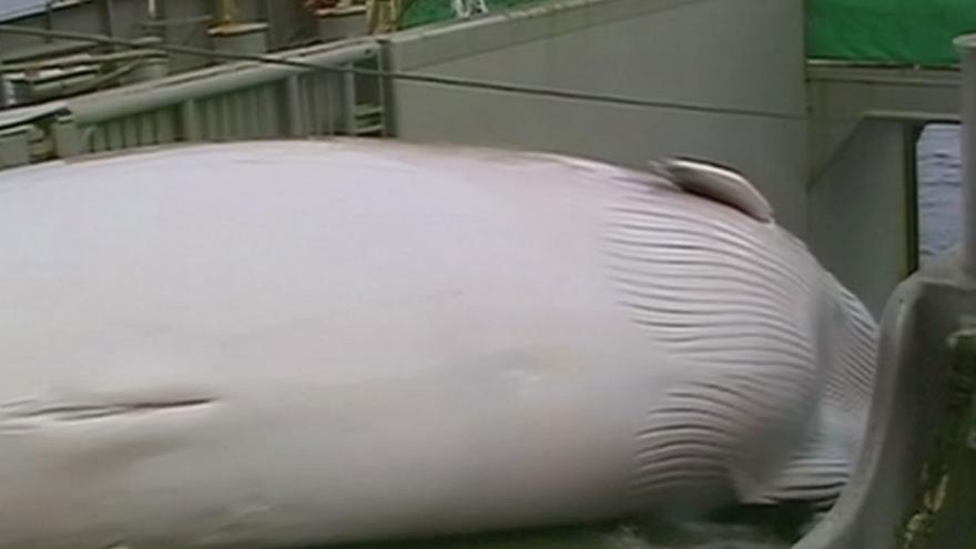 Saving the whale - IWC meets in Slovenia