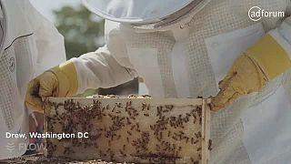 Flow™ Hive (BeeInventive Pty Ltd)