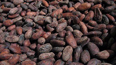 Côte d'Ivoire: deux grands pâtissiers voient la fève de cacao pour la première fois