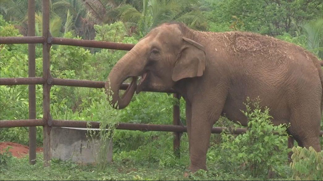 Дом для слонов в Бразилии