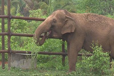 In Brasile una pensione per gli elefanti