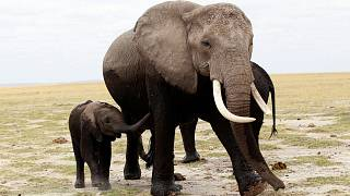 World wildlife population drops almost two-thirds in 40 years