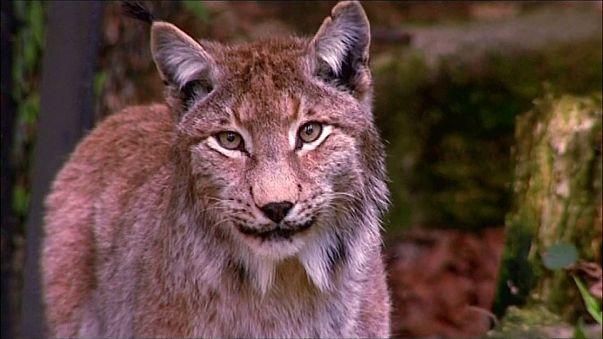 Allarme del WWF: spariti quasi i due terzi degli animali del pianeta