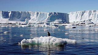 Antarktika'da dünyanın en büyük deniz koruma alanı oluşturuluyor