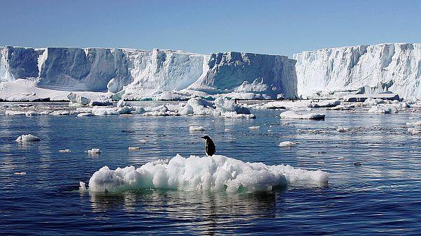 Pingvinparadicsom lett a Ross-tenger védett területe