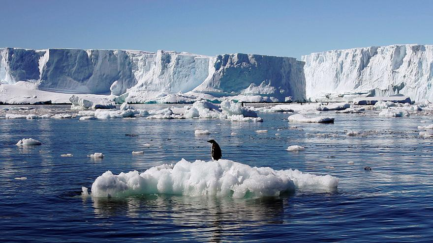 Penguin paradise - world's largest marine park agreed for Antarctica