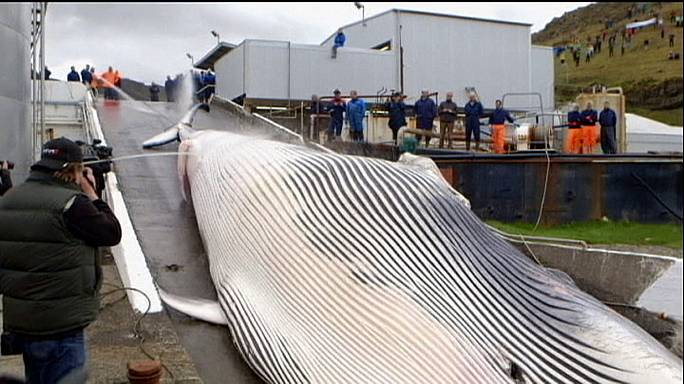 Japonya balina avı konusunda baskı altında
