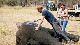 Malawi : le prince Harry contribue à la réinstallation de 500 éléphants