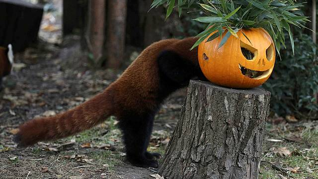 El origen europeo de Halloween y sus calabazas