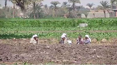 L' Égypte tente d'améliorer la sécurité alimentaire en zones rurales