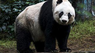 China: Panda-Avance endet glimpflich