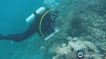 Scientists warn corals are dying in the Great Barrier Reef