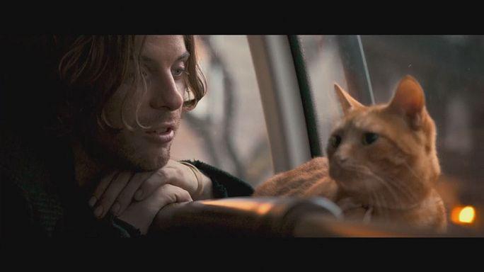 فيلم جديد يعكس مدى ارتباط الإنسان بالقطط !