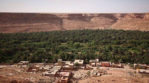 Марокко расширяет оазисы за счет клонированных саженцев