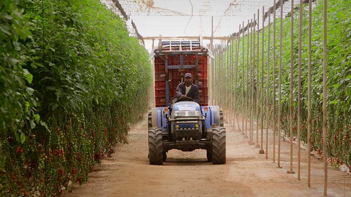 زراعت سازگار با تغییرات اقلیمی در مراکش