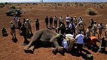 Scientists track elephant corridors in Kenya