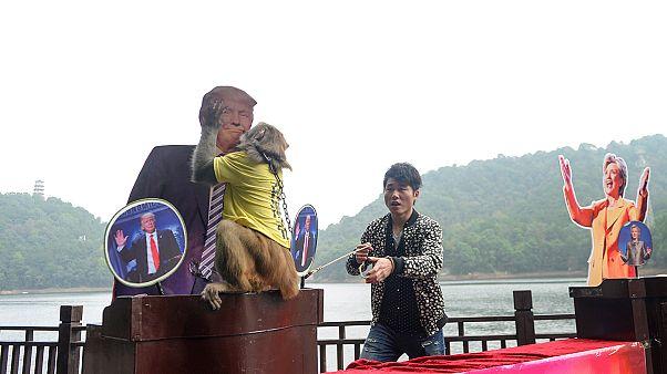 [Video] Gizemli maymun Geda kararını verdi, Donald Trump ABD başkanı olacak