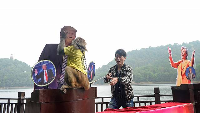 Monkey business as Trump is picked as US president