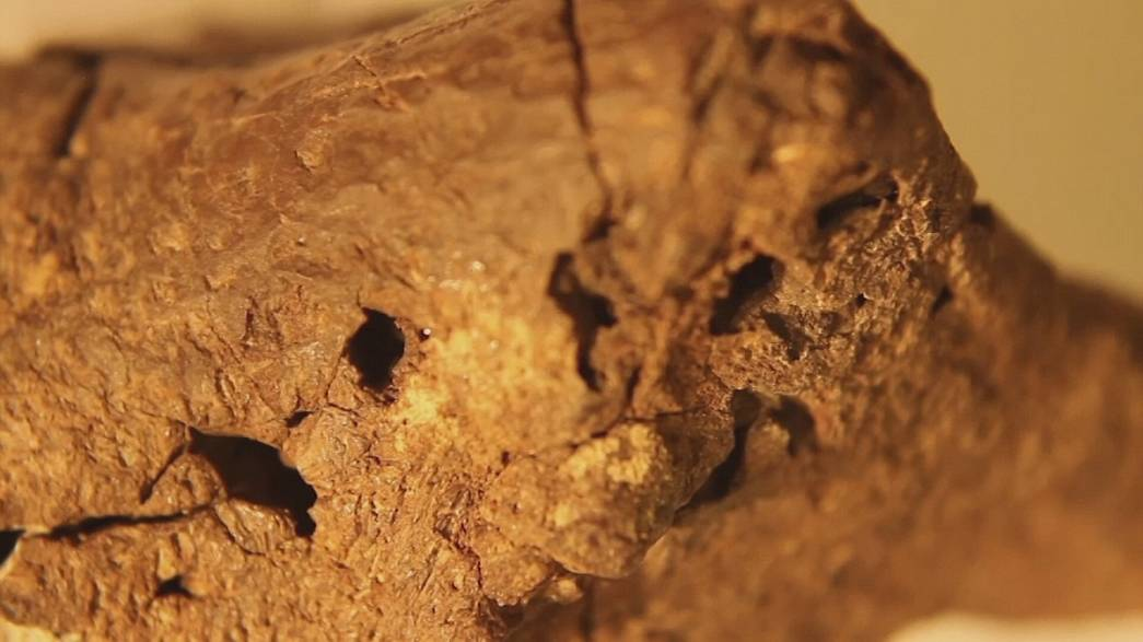 """Fossil is """"pickled"""" dinosaur brain say scientists"""