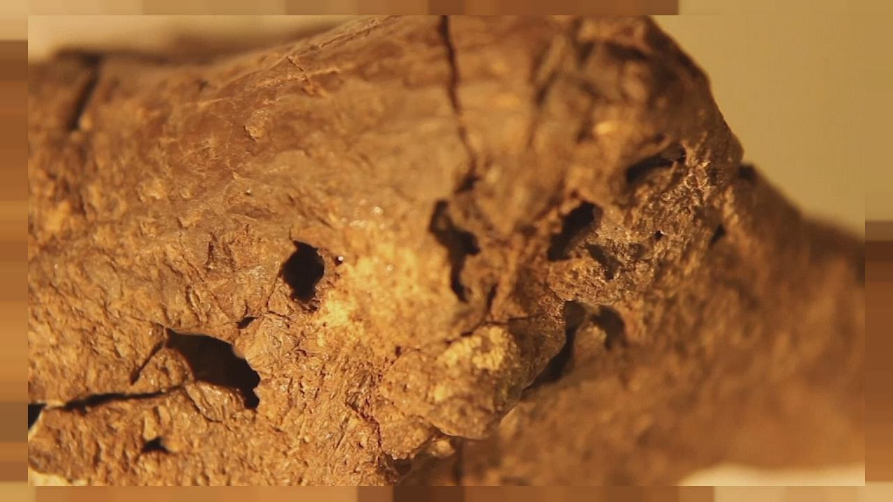 "Fossil is ""pickled"" dinosaur brain say scientists"
