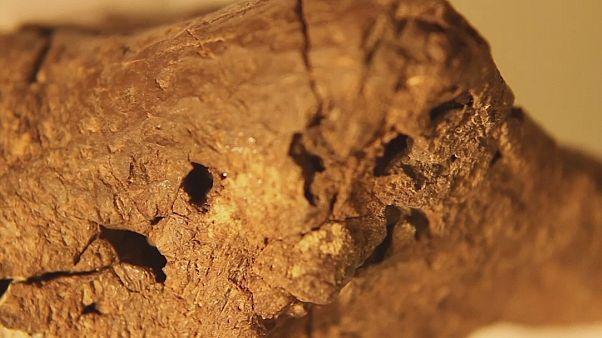 Мозги игуанодонта были обнаружены в графстве Сассекс
