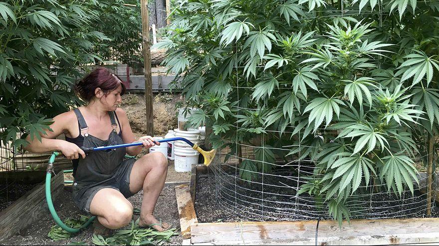Nyolc állam legalizálta a marihuánát