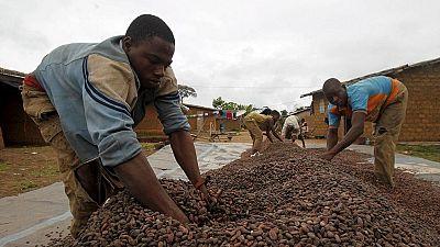 I.Coast: Land disputes ensue in western cocoa belt