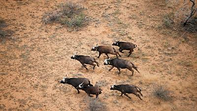 South Africa's wild game breeders count mounting costs of drought