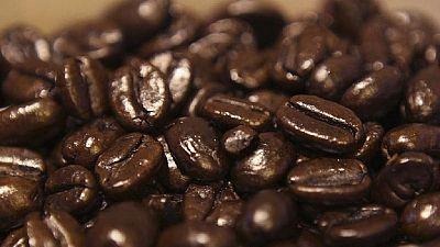 Un café plus torréfié et de bon goût, le nouvel objectif des agriculteurs kényans