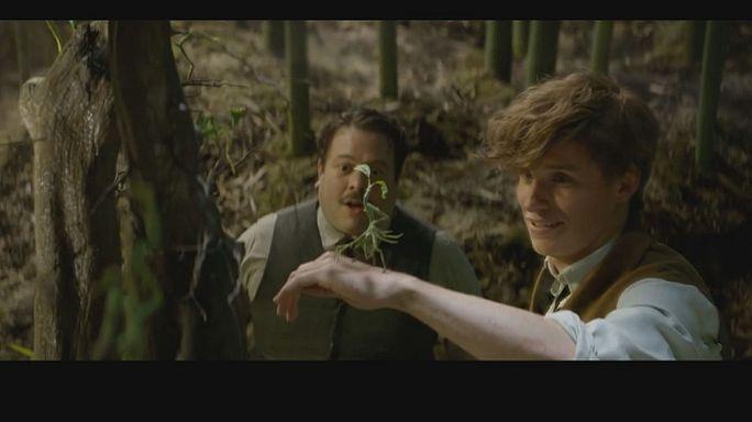 Eddy Redmayne is J. K. Rowling's new wizzard