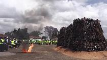 Kenya: More than 5000 illegal arms set ablaze [No Comment]