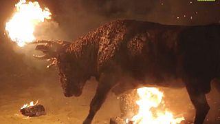 Быку поджигают рога на испанском фестивале Toro Júbilo