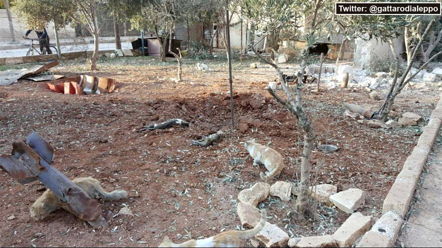Aleppo's famed cat sanctuary among recent victims in war-torn Syria